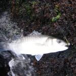 bass3-150x150