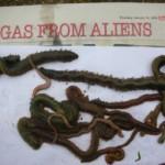 ragworm-e1302466432343-150x150